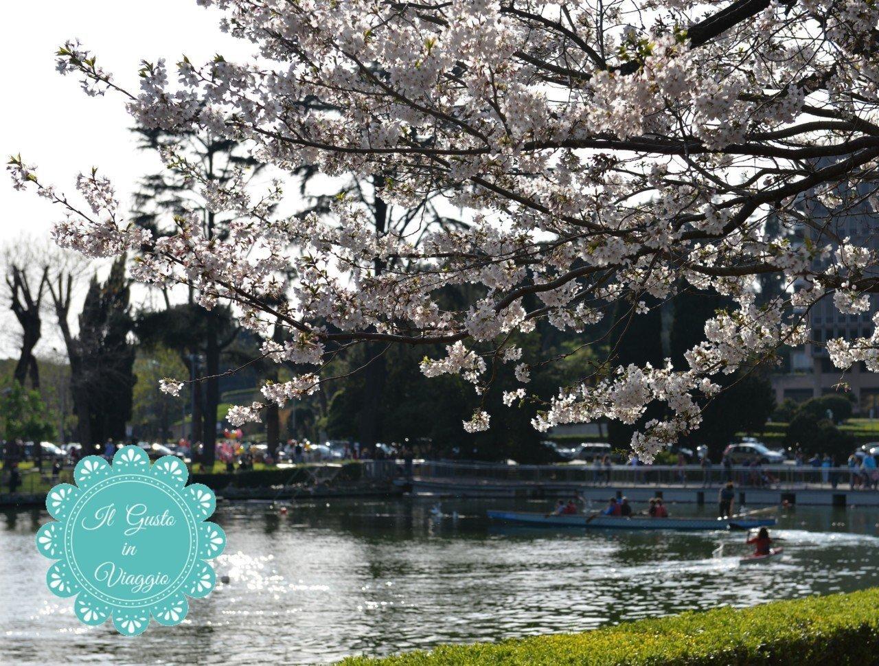 Hanami al laghetto dell 39 eur la primavera giapponese a for Laghetto giapponese