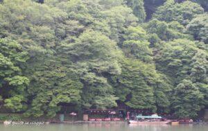 foresta di bambu di arashijama kyoto