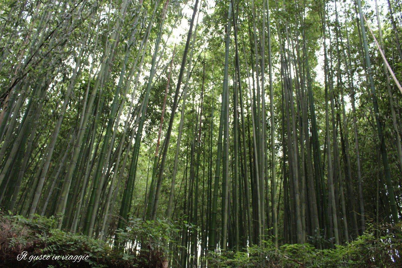foresta di bambu arashiyama kyoto giappone