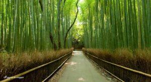 foresta di bambu kyoto arashijama