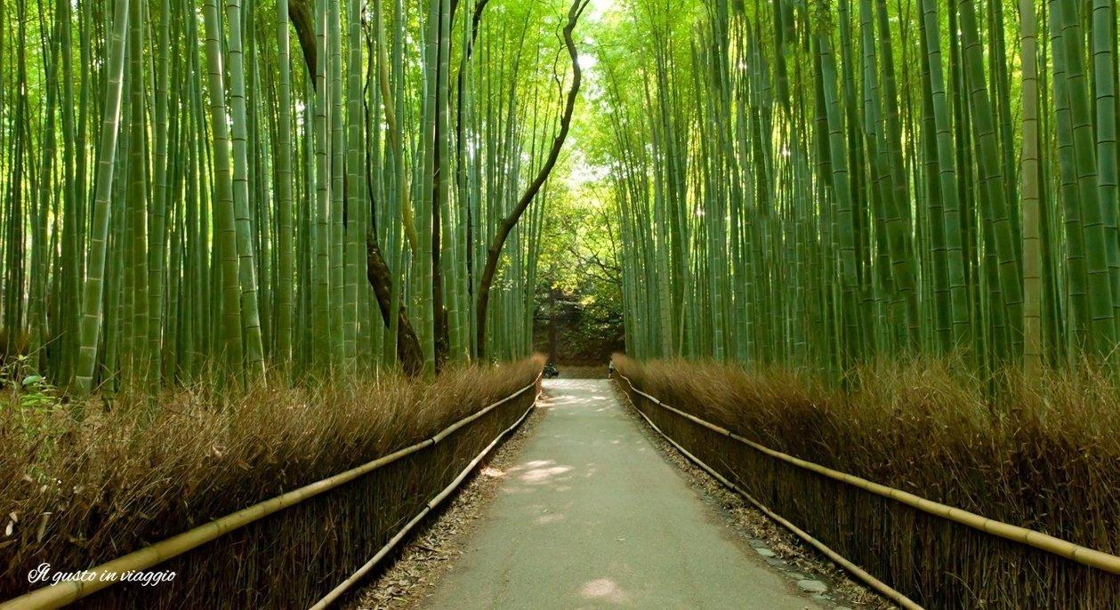 foresta di bambu kyoto arashiyama
