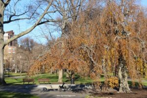 passeggiata al boston common park di boston