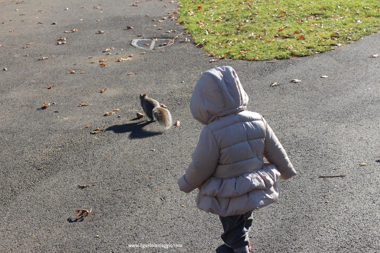 prima volta a boston, passeggiata al boston common park di boston
