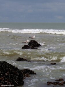 ostenda e il mare del nord, gabbiani, cozze, mare nord, ostenda belgio