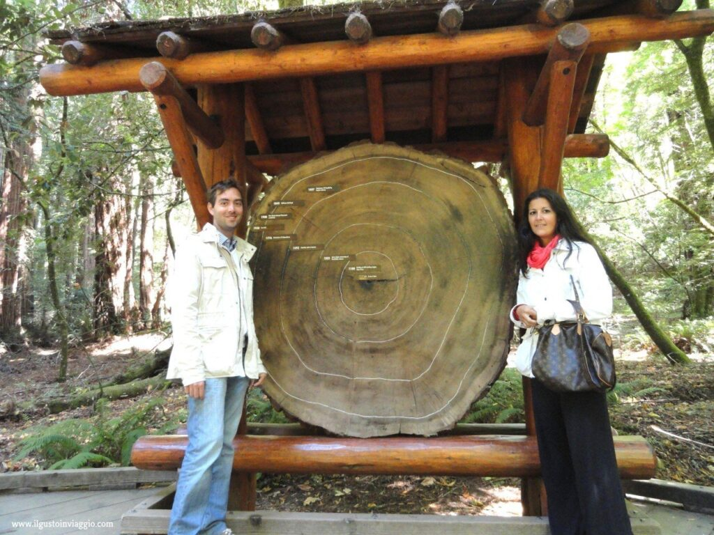 muir woods national monument, california sequoie, sequoie del muir woods , redwood national park