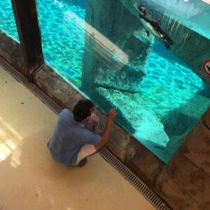 un giorno a zoomarine, zoomarine roma, dolphins pinguins