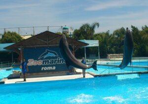 un giorno a zoomarine, dolphins, delfini