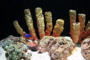 visitare l'acquario di bangkok, sealife aquarium