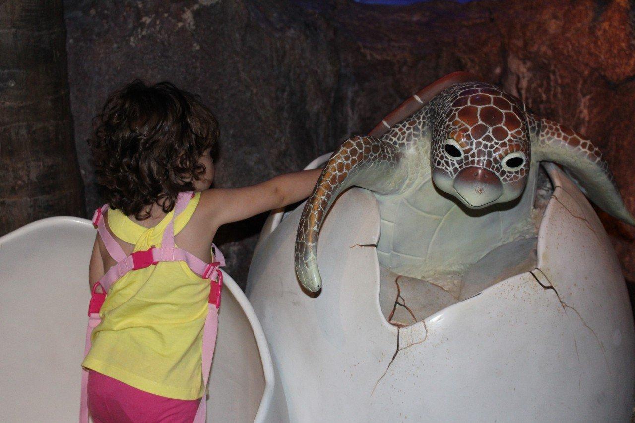visitare l'acquario di bangkok, sea life aquarium bangkok, turtle