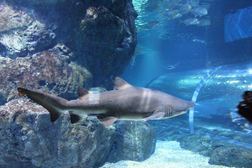 visitare l'acquario di bangkok, shark, sealife bangkok
