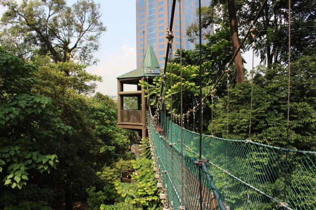 canopy walk di kuala lumpur, kl forest park, cosa fare a kuala lumpur con i bambini gratis