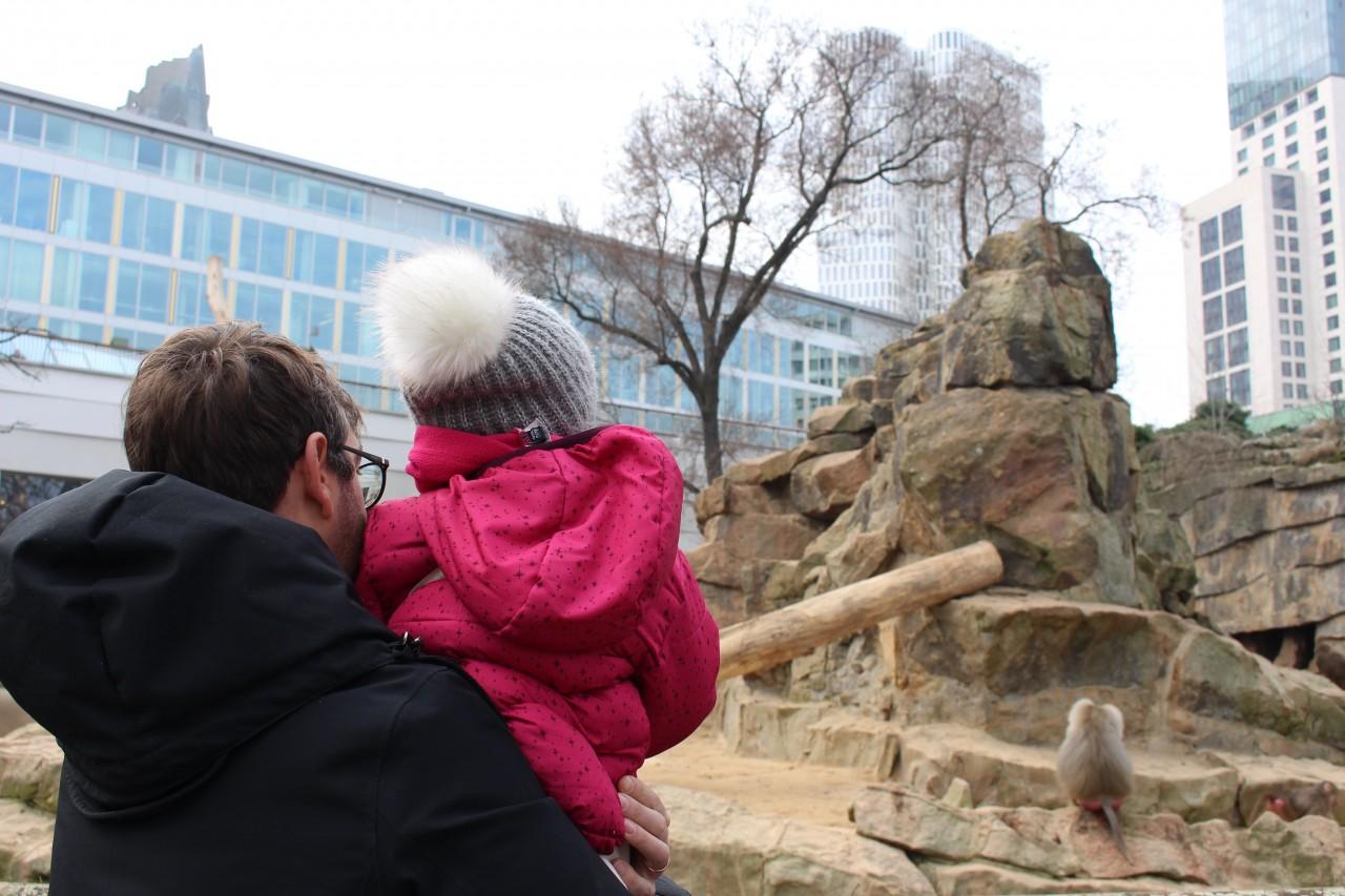 zoo berlino, cosa fare a berlino con i bambini