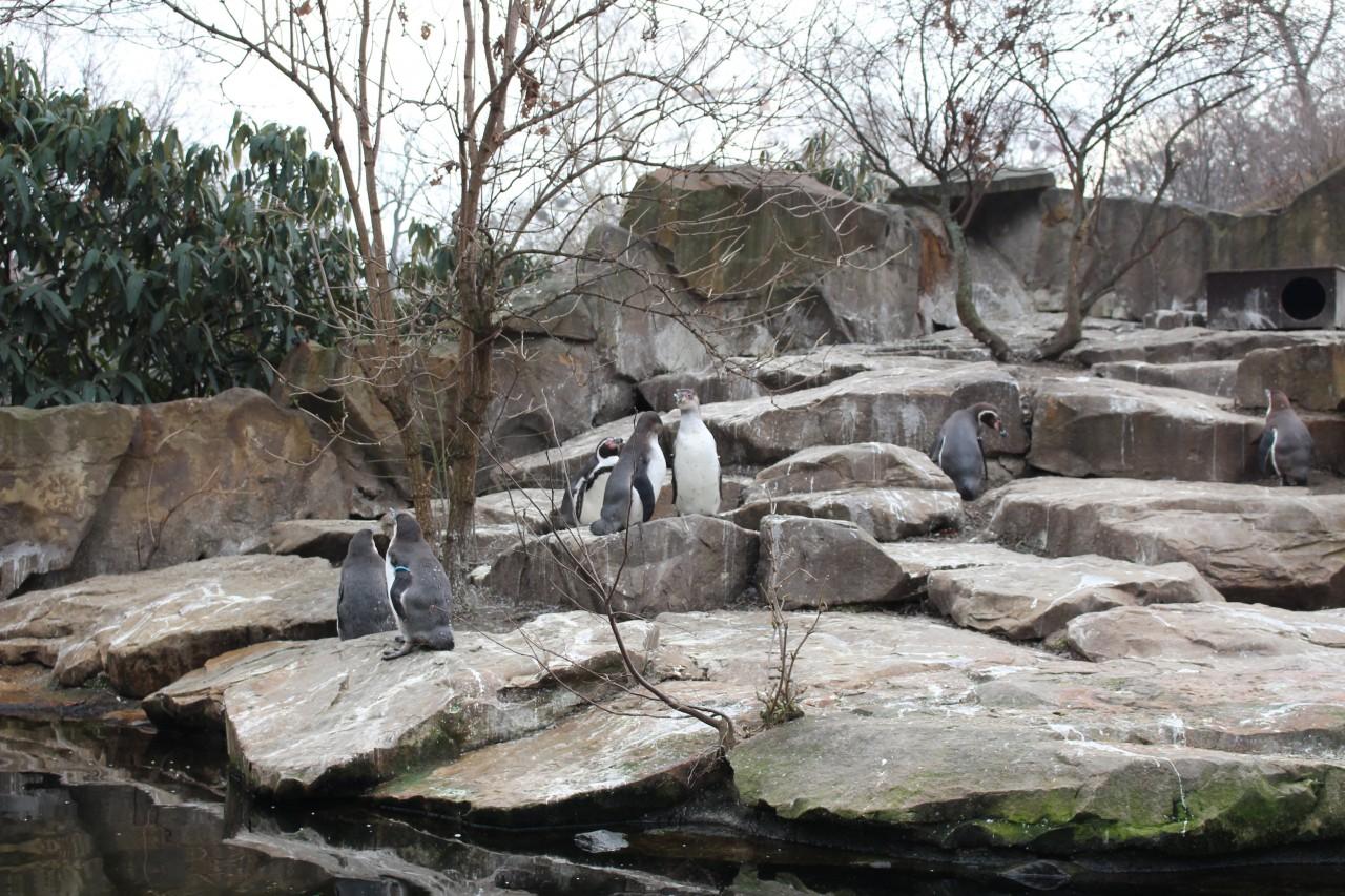 visitare lo zoo di berlino