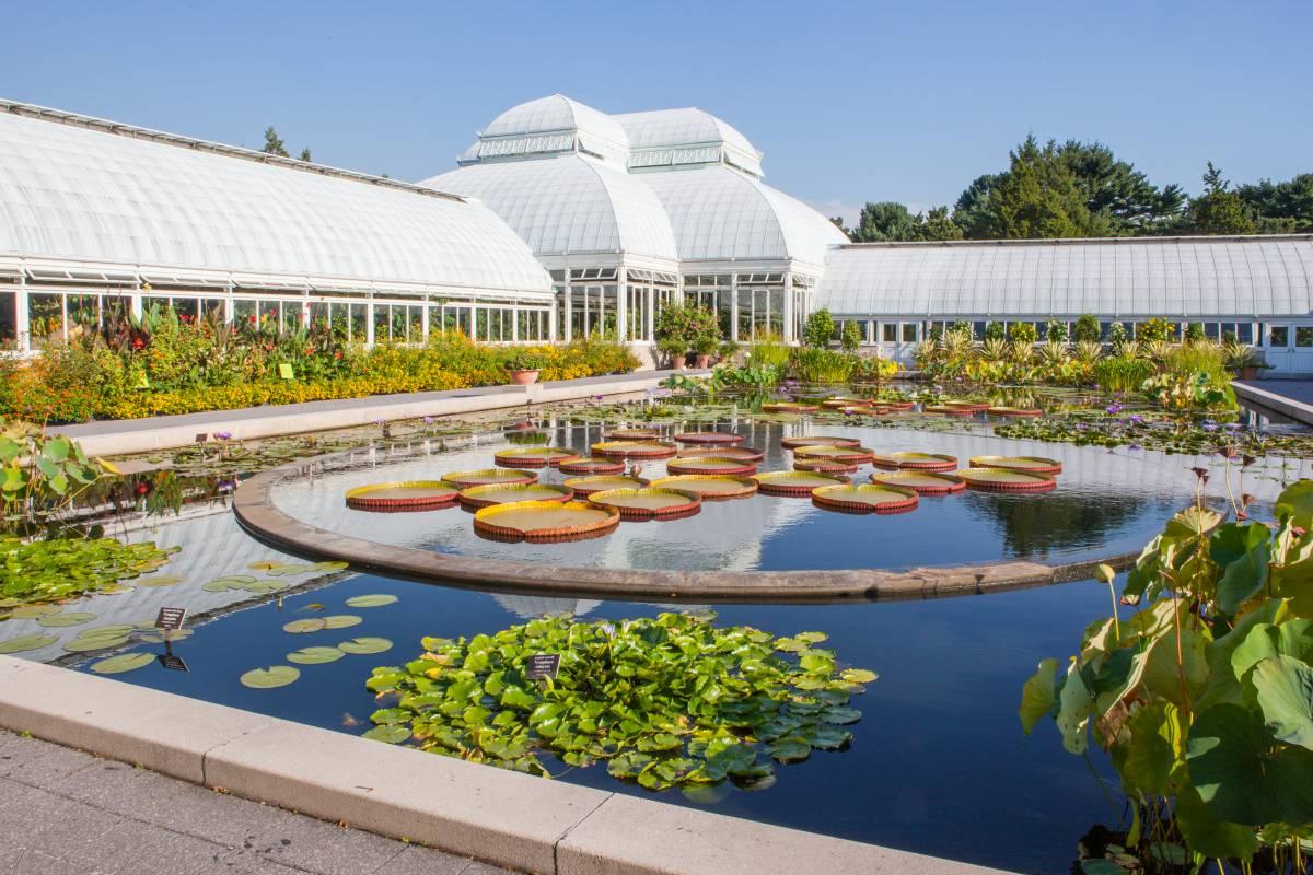 bronx con i bambini, new york botanic garden